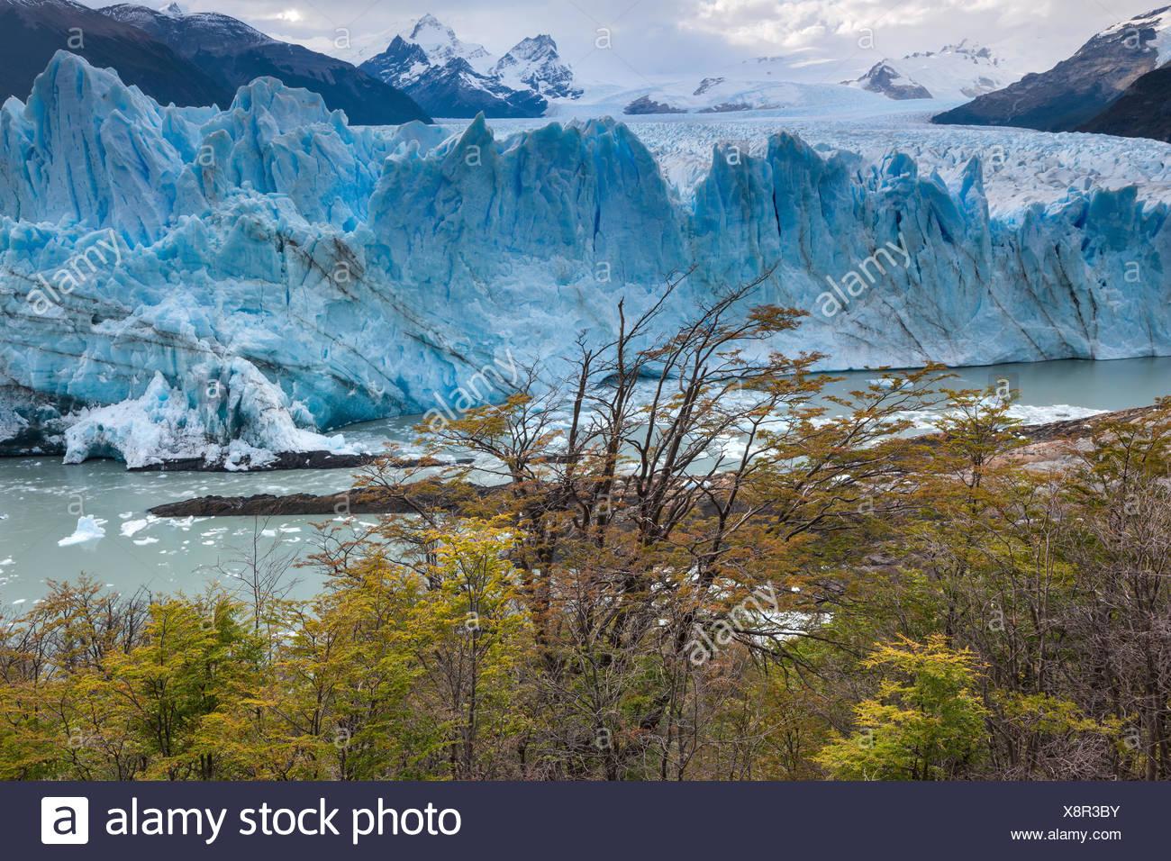 Perito Moreno,glacier,Argentina,Patagonia - Stock Image
