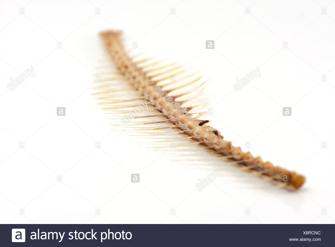Fishbone Stock Photo