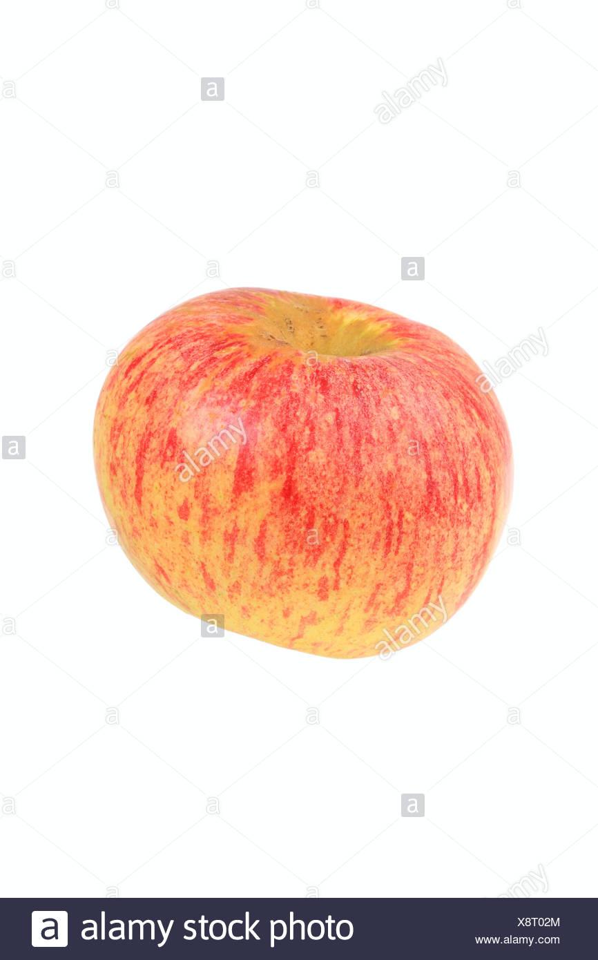 Apple, Wohlschmeckender aus Vierlanden variety - Stock Image