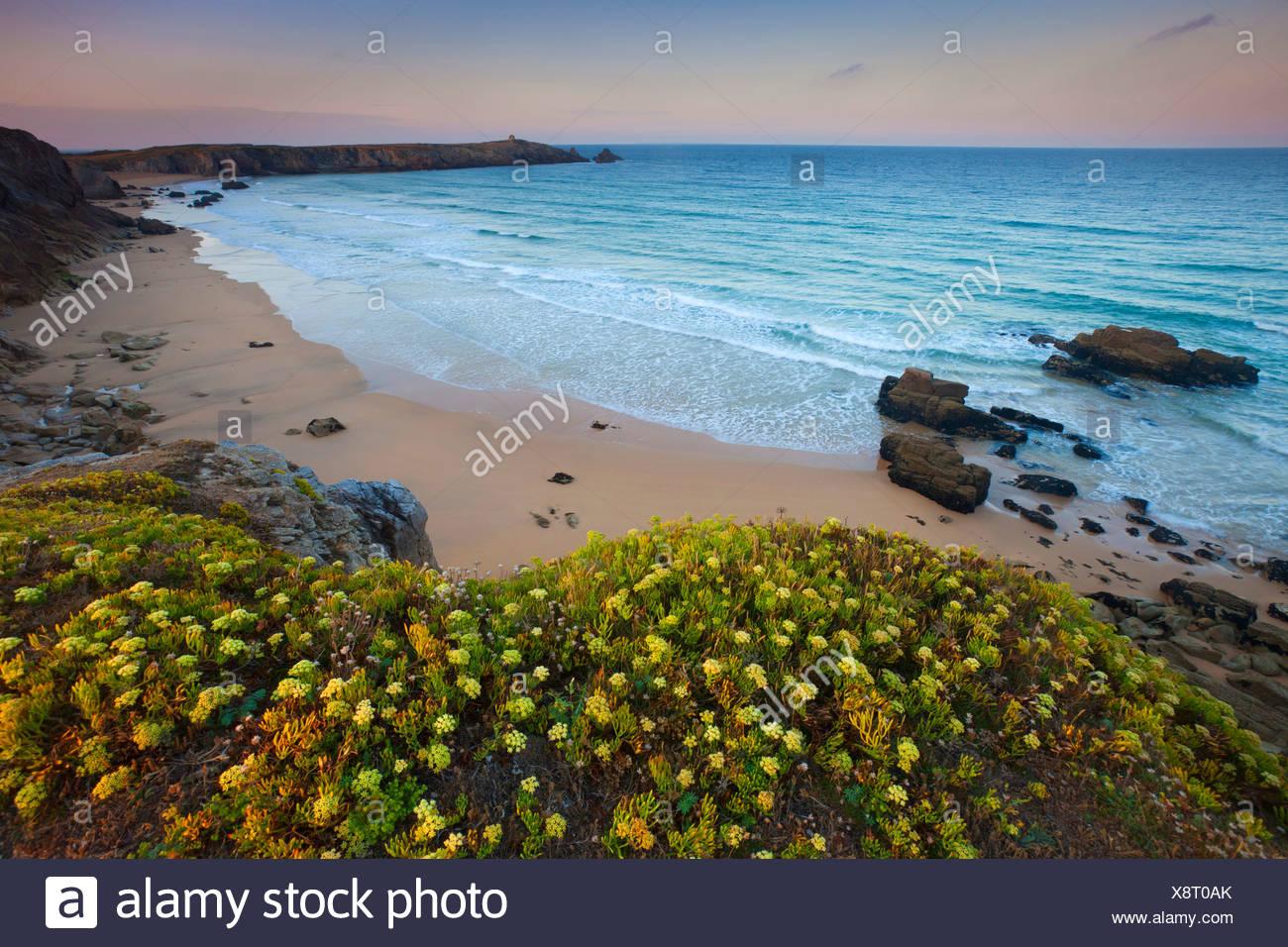 Côte Sauvage, France, Europe, Brittany, department Morbihan, coast, rock, cliff, sea, sand beach, coastal vegetation - Stock Image