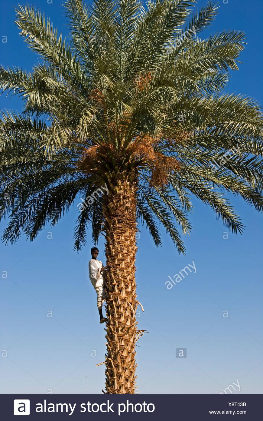 Dating sudanesiska