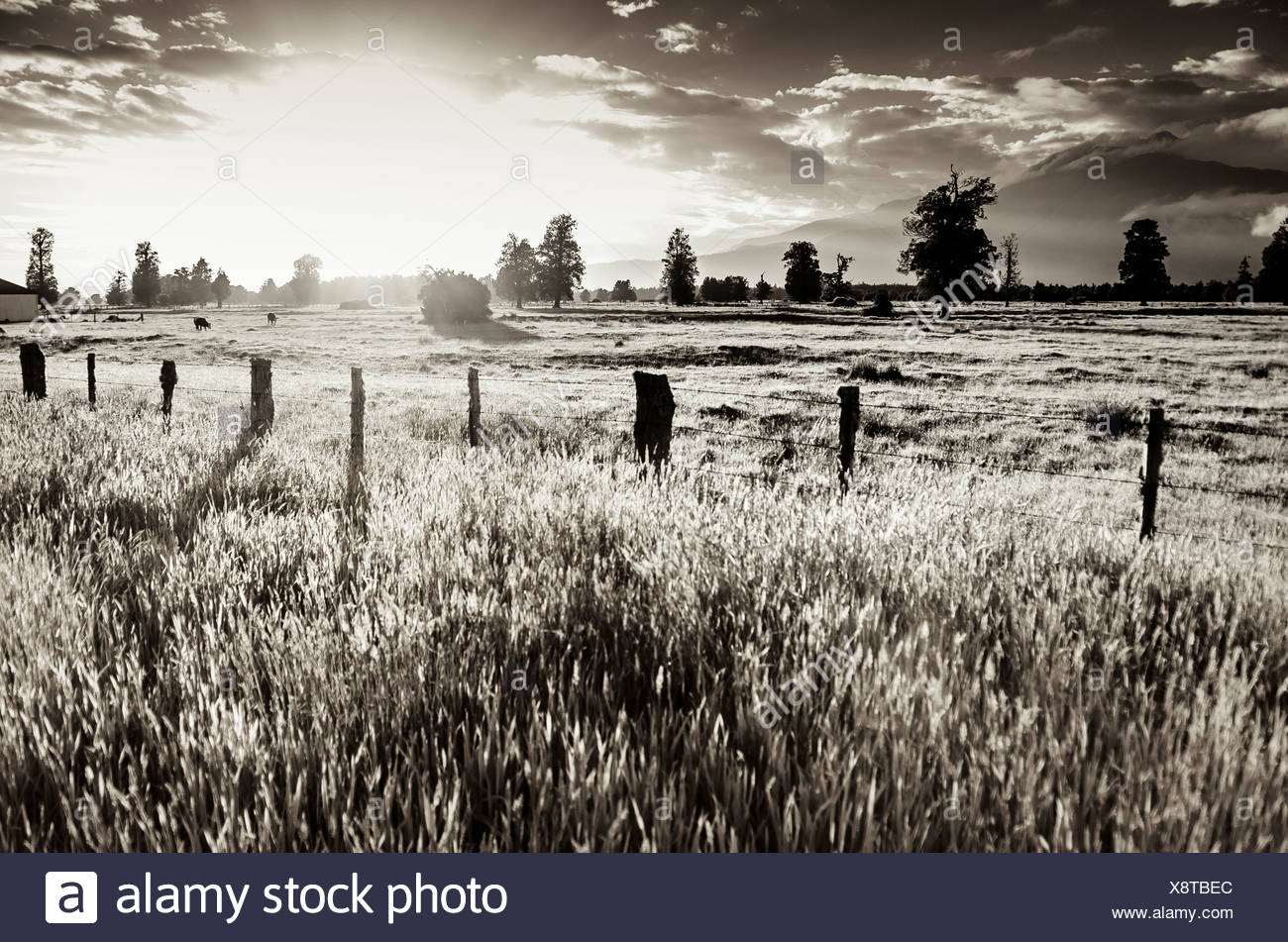 Sunset with a fenced-off pasture, black and white, South Island, New Zealand - Stock Image