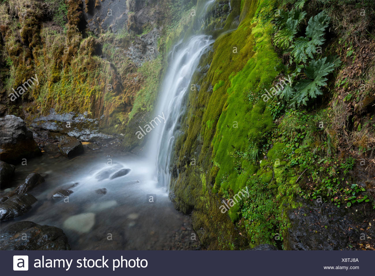 South America,Argentina,Patagonia,Rio Negro,Esquel,waterfall in the Los Alerces National park, - Stock Image