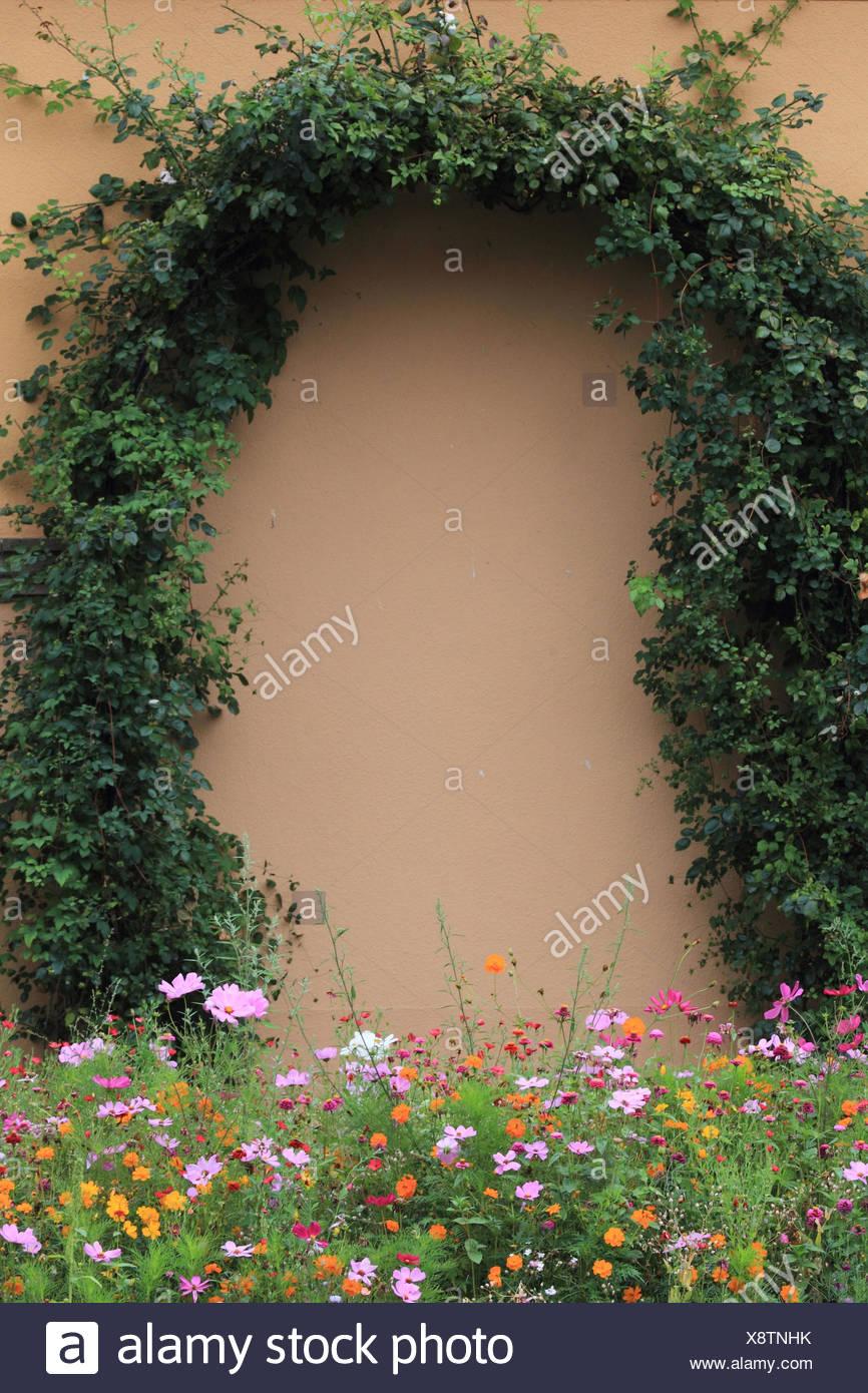 Garden, flowers, rose bows, - Stock Image