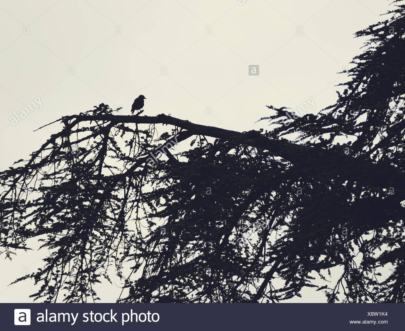 Silhouette Of Bird Siting On Branch