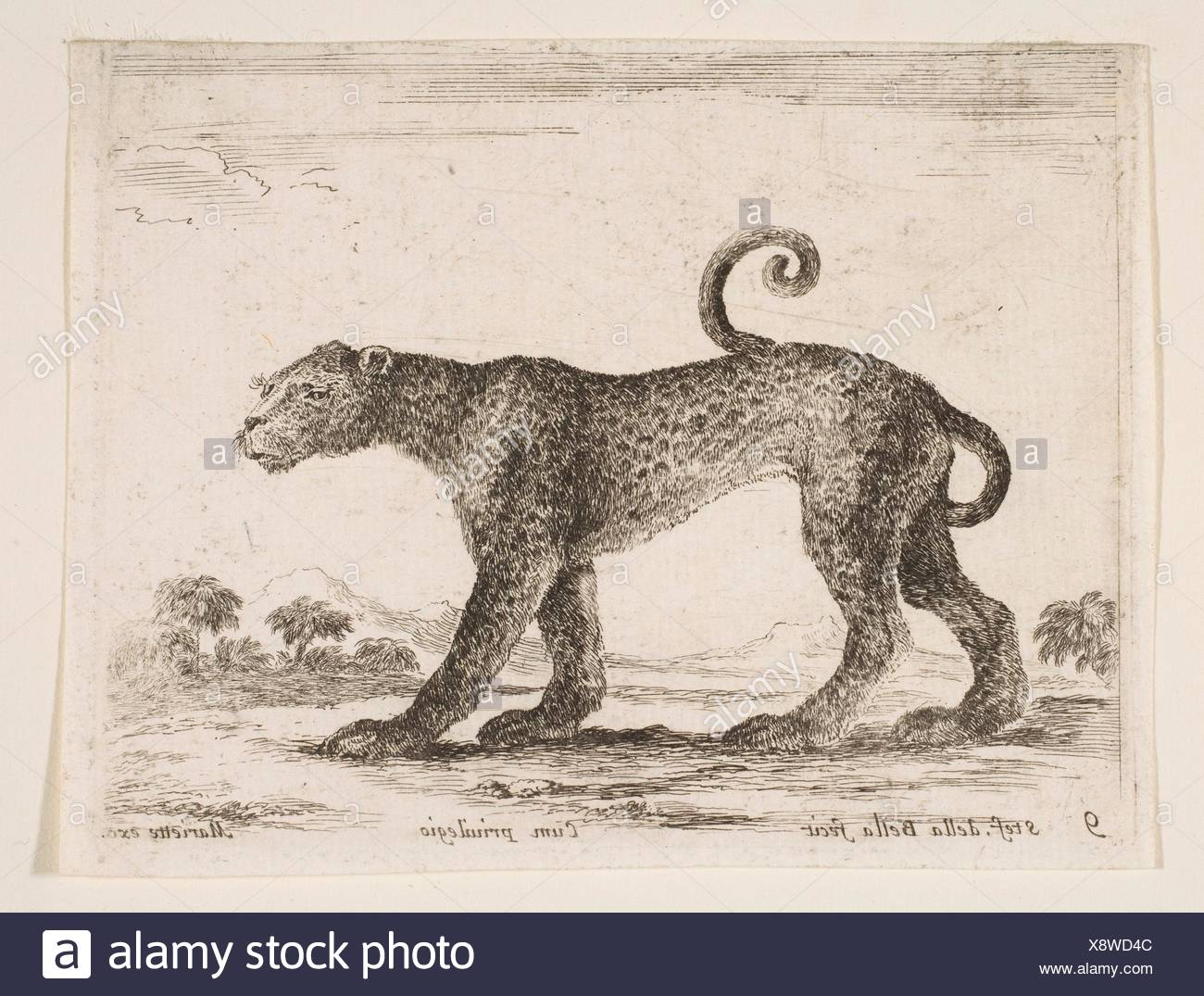 Plate 9: leopard, from 'Various animals' (Diversi animali). Series/Portfolio: 'Various animals' (Diversi animali); Artist: Stefano della Bella - Stock Image