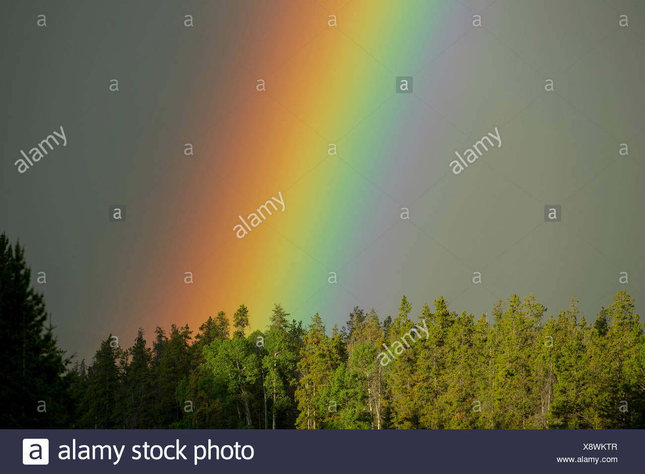A vibrant rainbow shines above the forest. - Stock Image