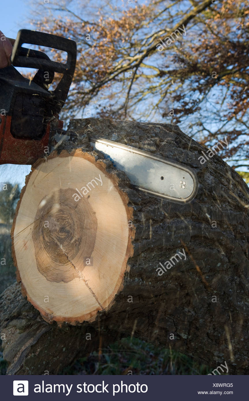 Close up of chainsaw cutting log Stock Photo