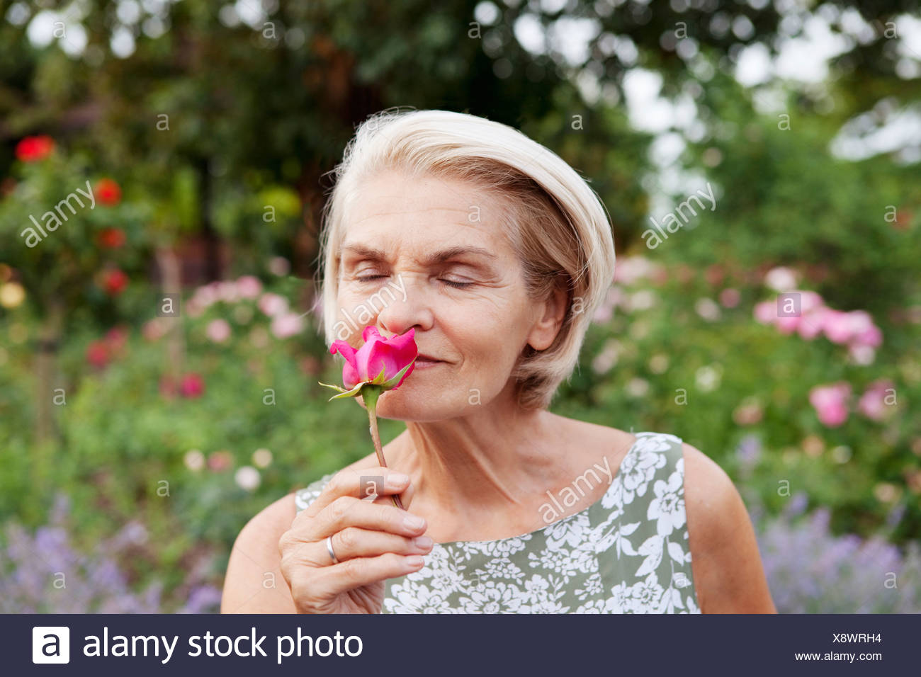 Mature woman smells rose in rose garden Stock Photo