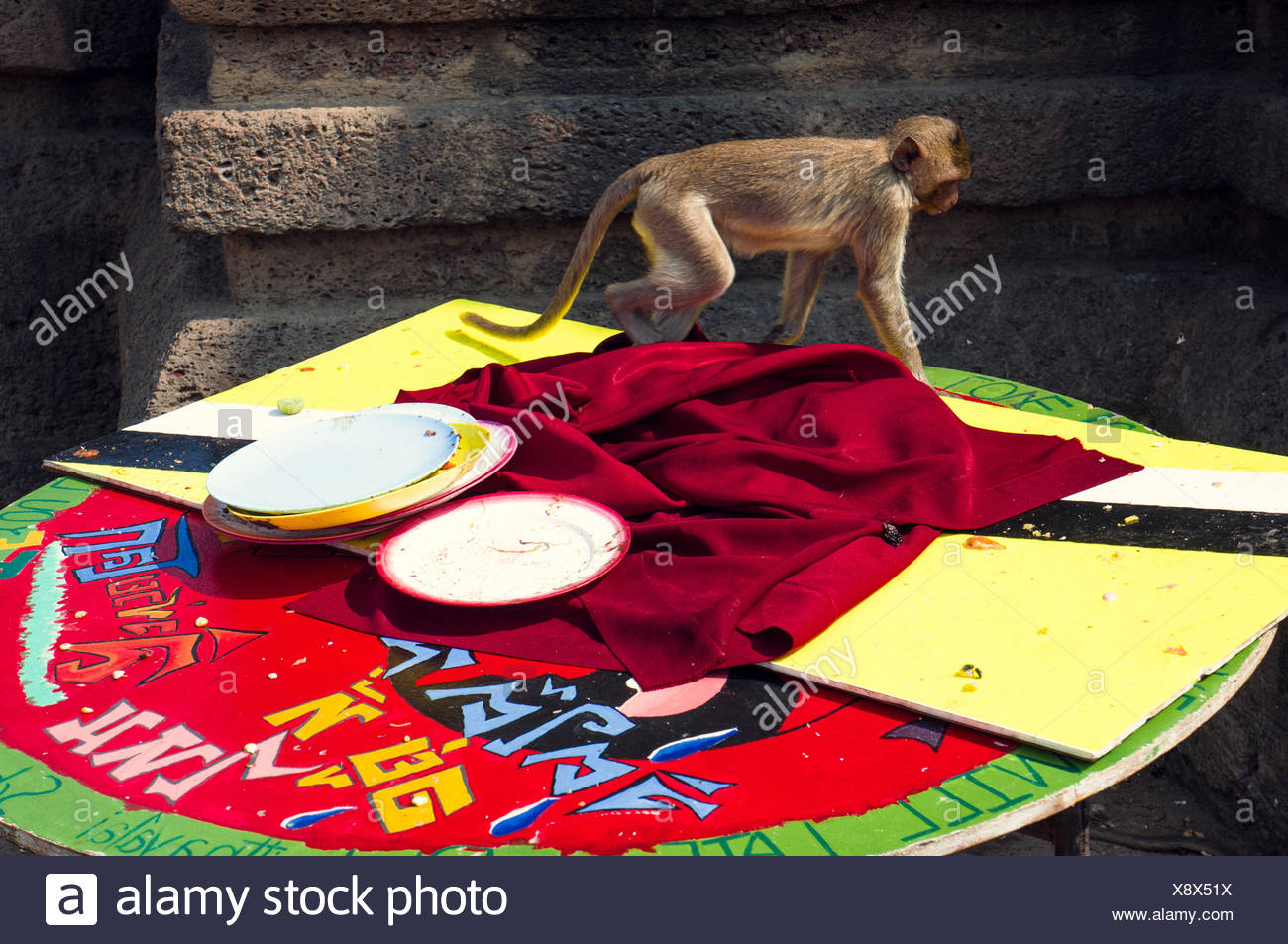 Monkey On Table - Stock Image