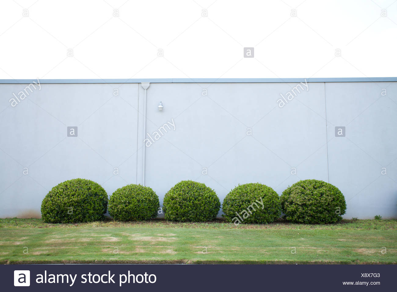 Round bushes by wall - Stock Image