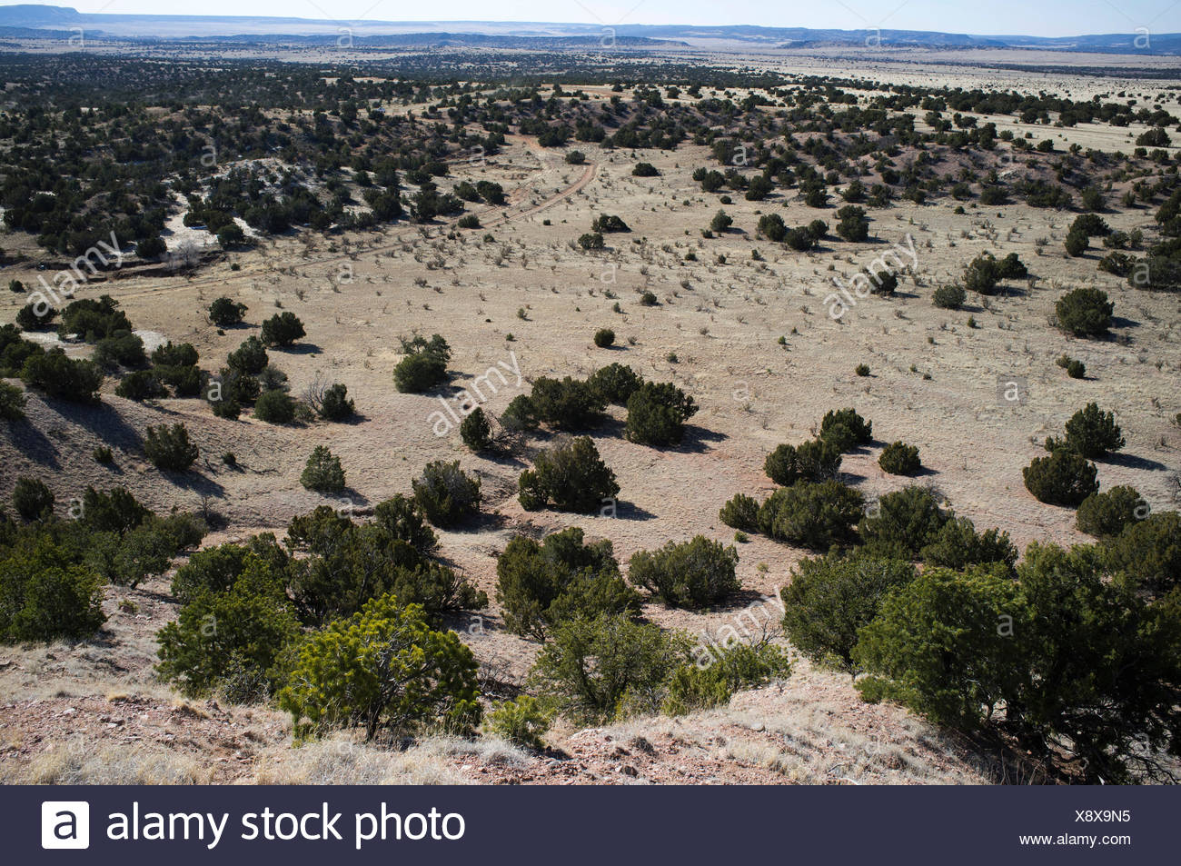 The Galisteo Basin is dotted with sparse vegetation. - Stock Image