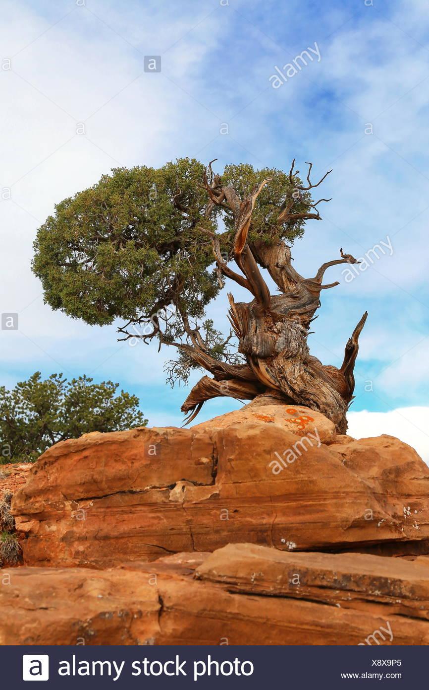 Baum - Stock Image