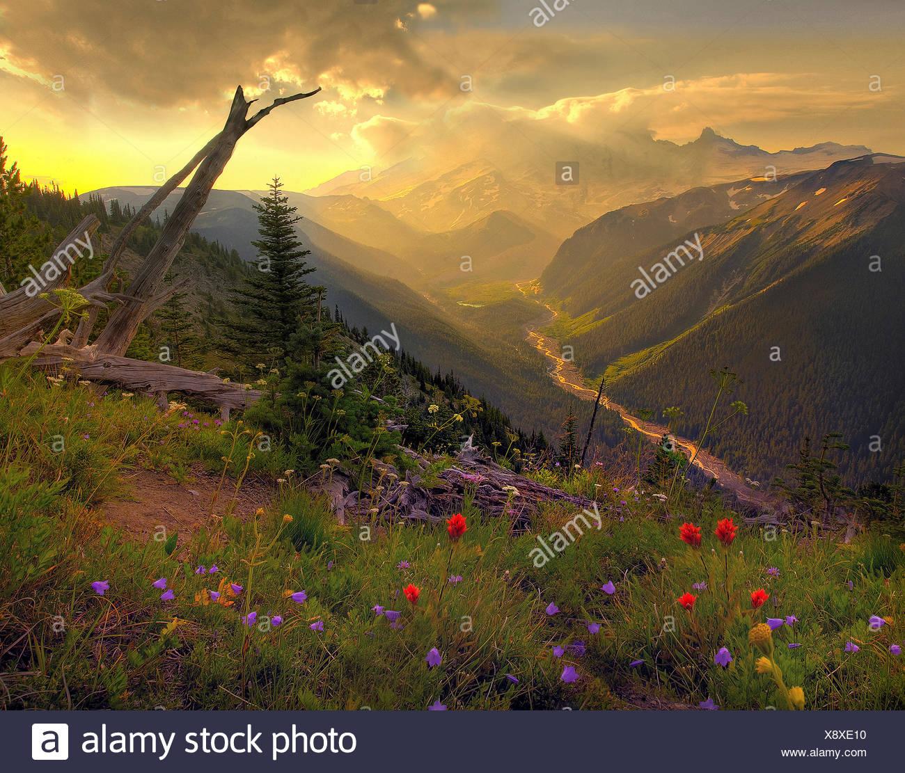 USA, United States, America, Pacific Northwest, Washington, Washington State, Mount Rainier, National Park, volcanic, landscape, - Stock Image