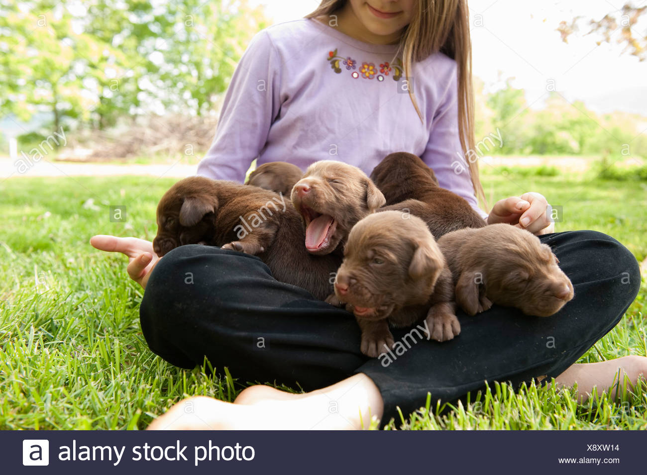 Adolescent holding puppies - Stock Image