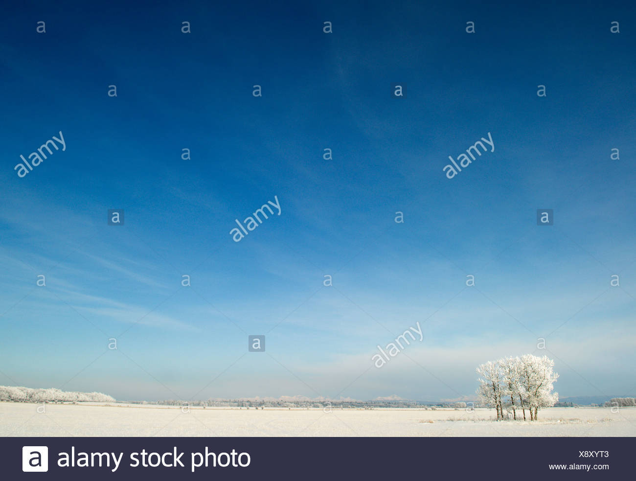 Frosted trees near Water Valley, Alberta, Canada - Stock Image