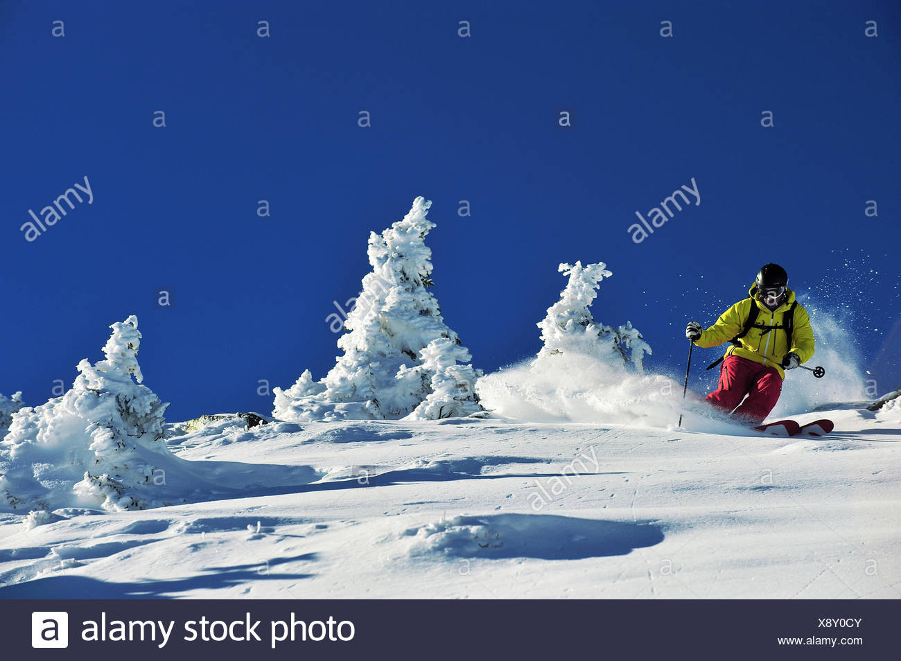 of-piste skiing between snow-covered conifers, France - Stock Image