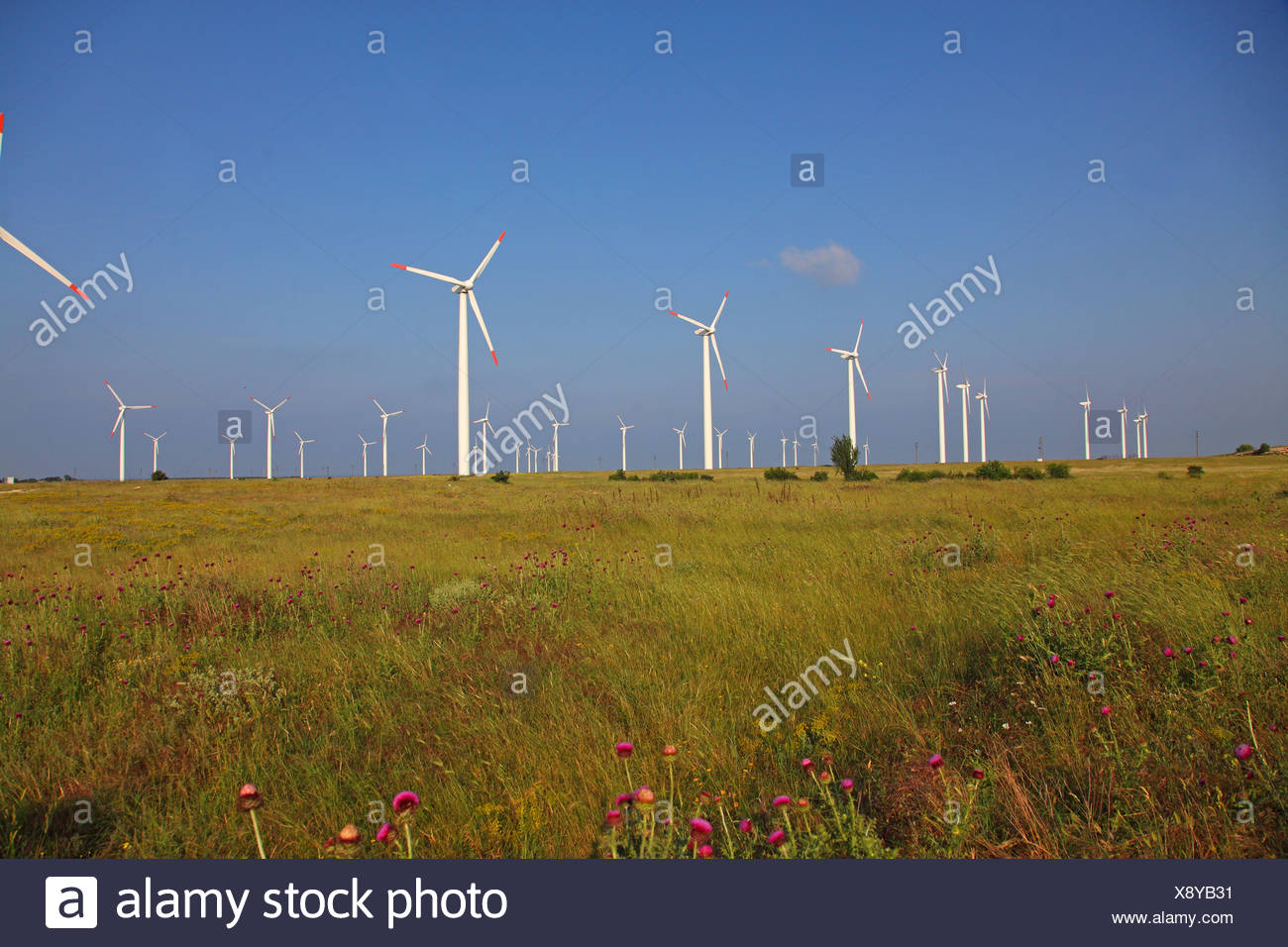 wind farm in meadow, Bulgaria, Kaliakra - Stock Image