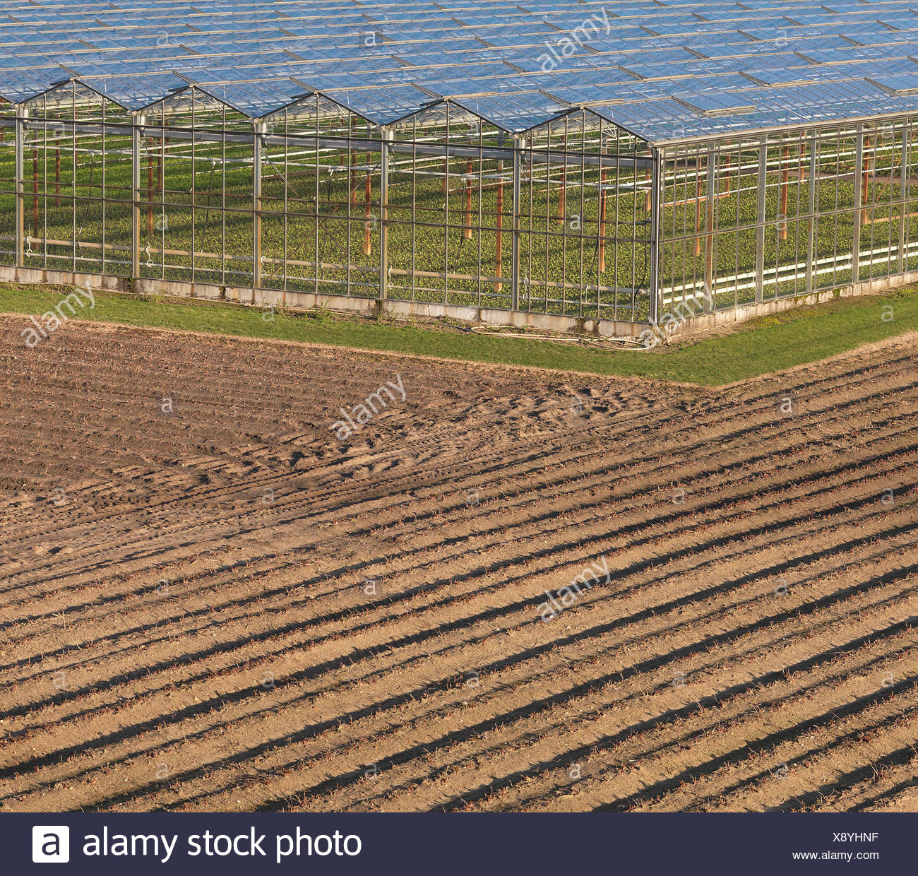 Greenhouses in ploughed field - Stock Image