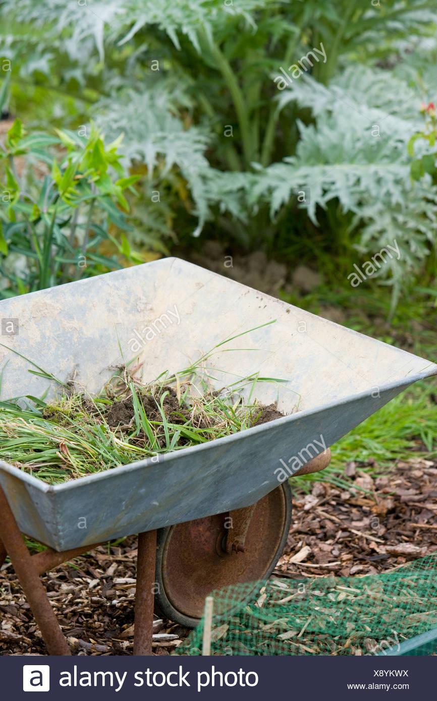 wheelbarrow with weeds inside - Stock Image