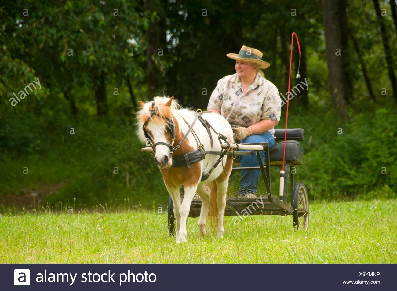 Miniature Horse Stock Photos   Miniature Horse Stock Images - Page 2 ... f320338c196d