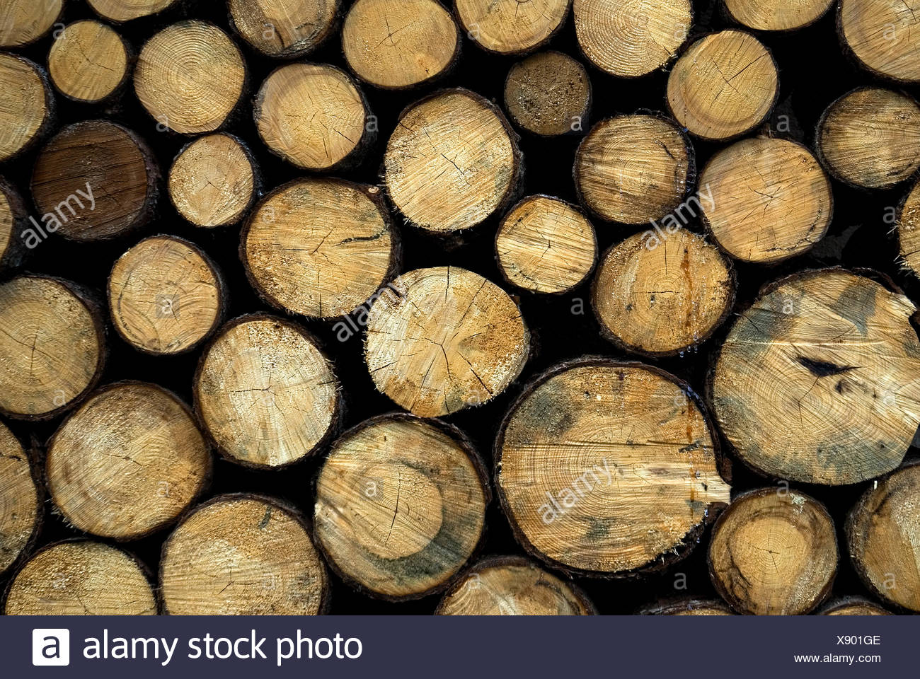 wood stack stacked sawed off bruised blown off complete perfect baumstmme ber - Stock Image