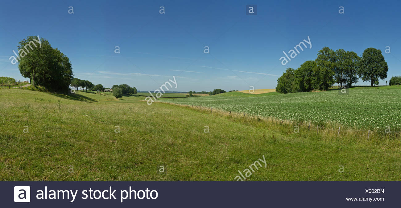Netherlands, Holland, Europe, Termoors, Klimmen, Hilly, Hill, countryside, landscape, field, meadow, trees, summer, hills, - Stock Image