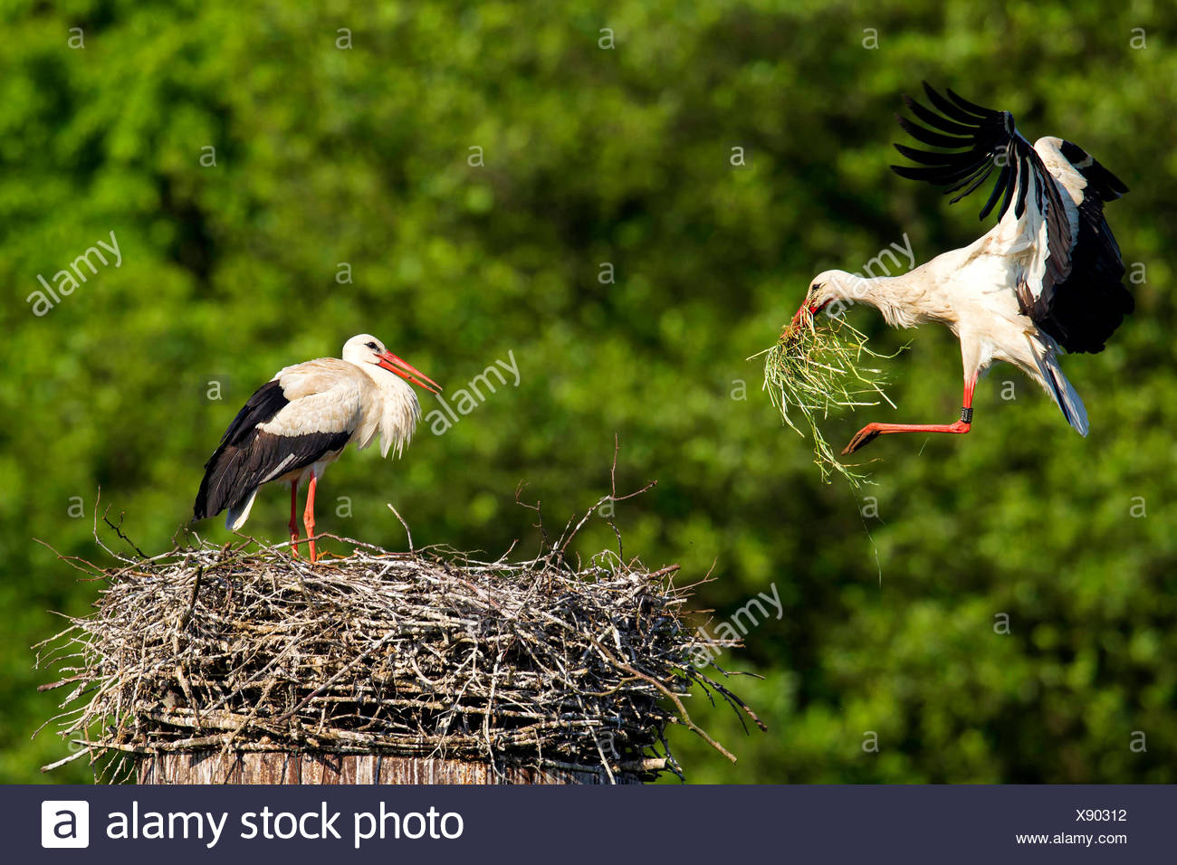 Waiting for the stork