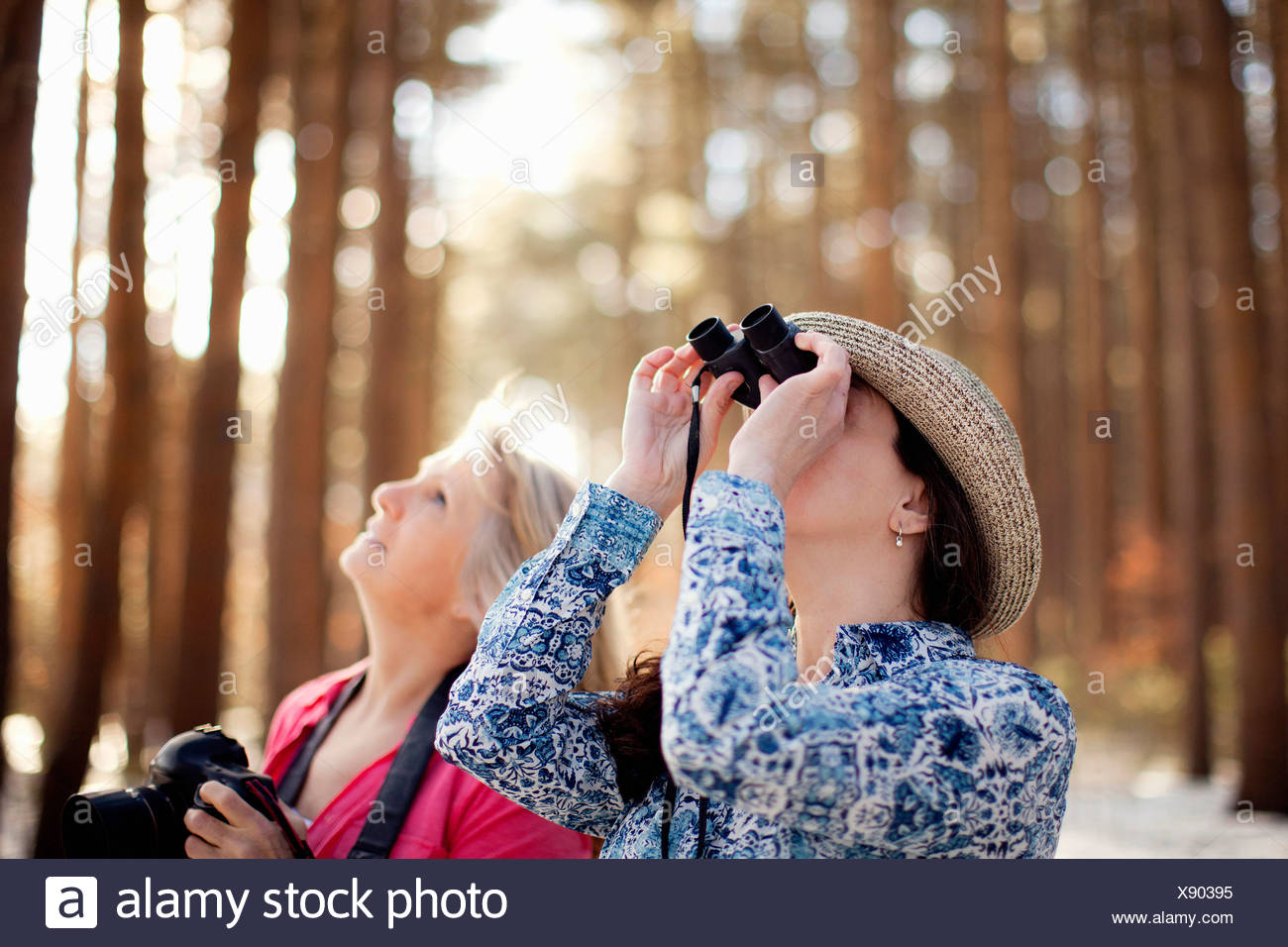 Two mature women bird watching in forest - Stock Image