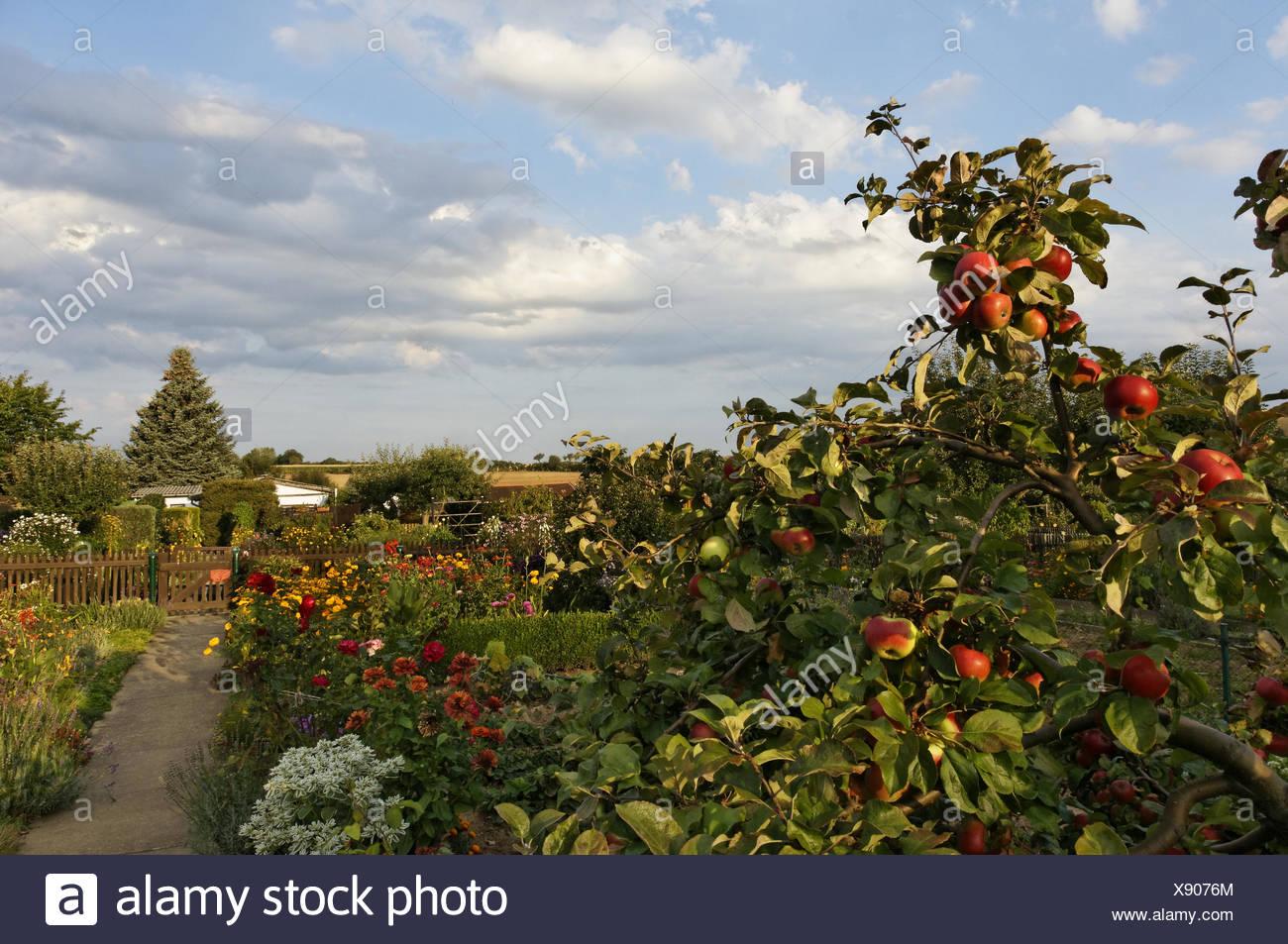 summery garden impressions - Stock Image