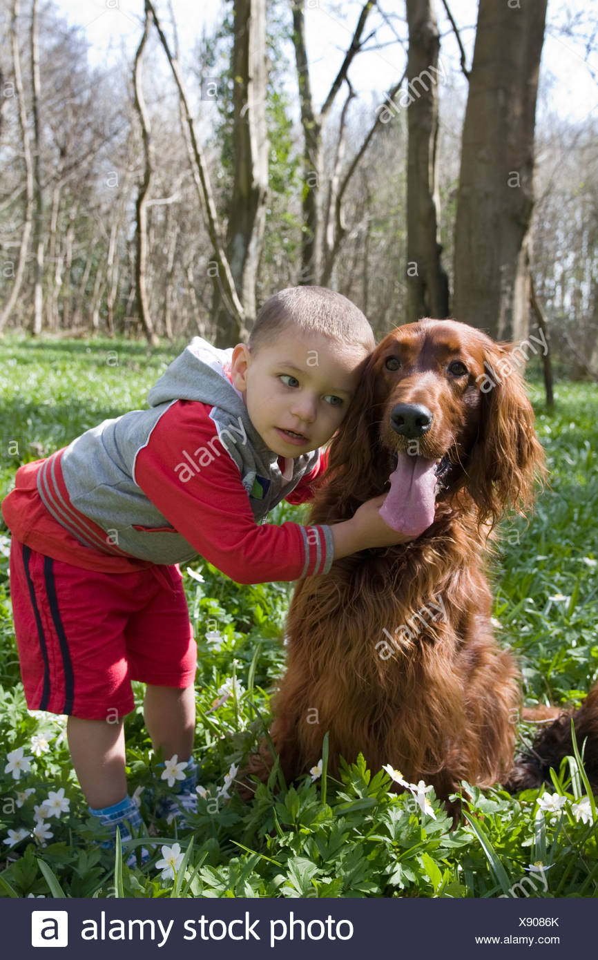 little boy playing with irish setter dog Stock Photo