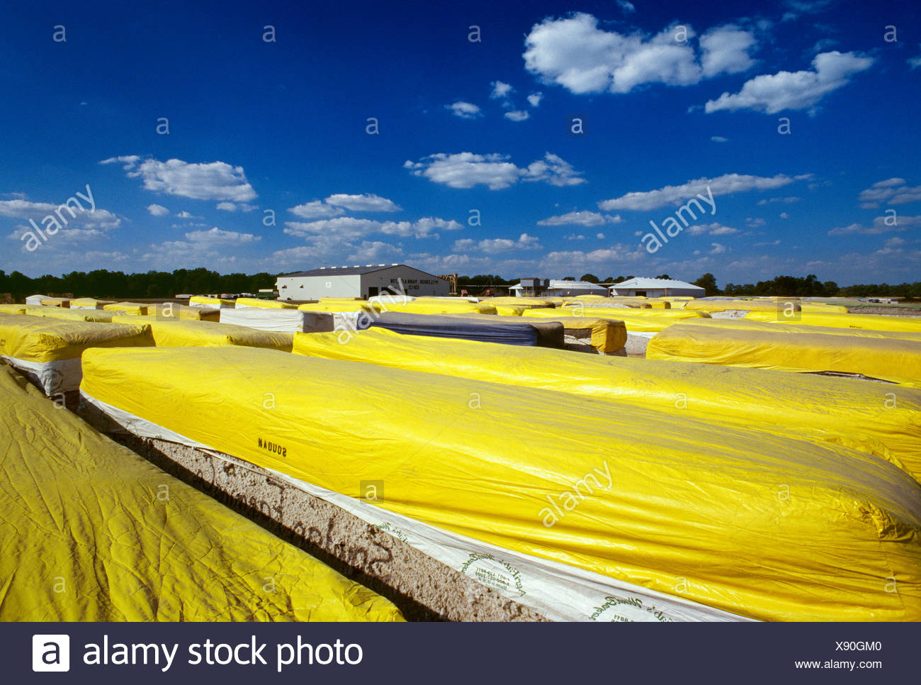 Agriculture - Cotton modules with yellow tarps await processing at a cotton gin / Marianna, Arkansas, USA. - Stock Image