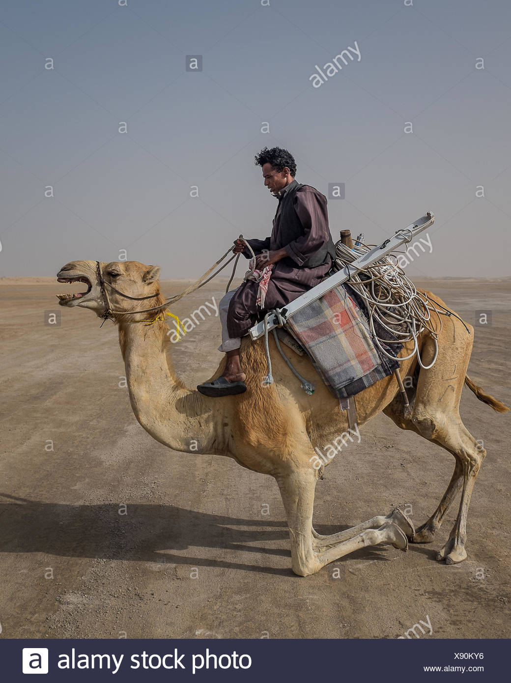 An electrical contractor uses a camel to make his way through the remote Inland Sea region of Qatar. - Stock Image