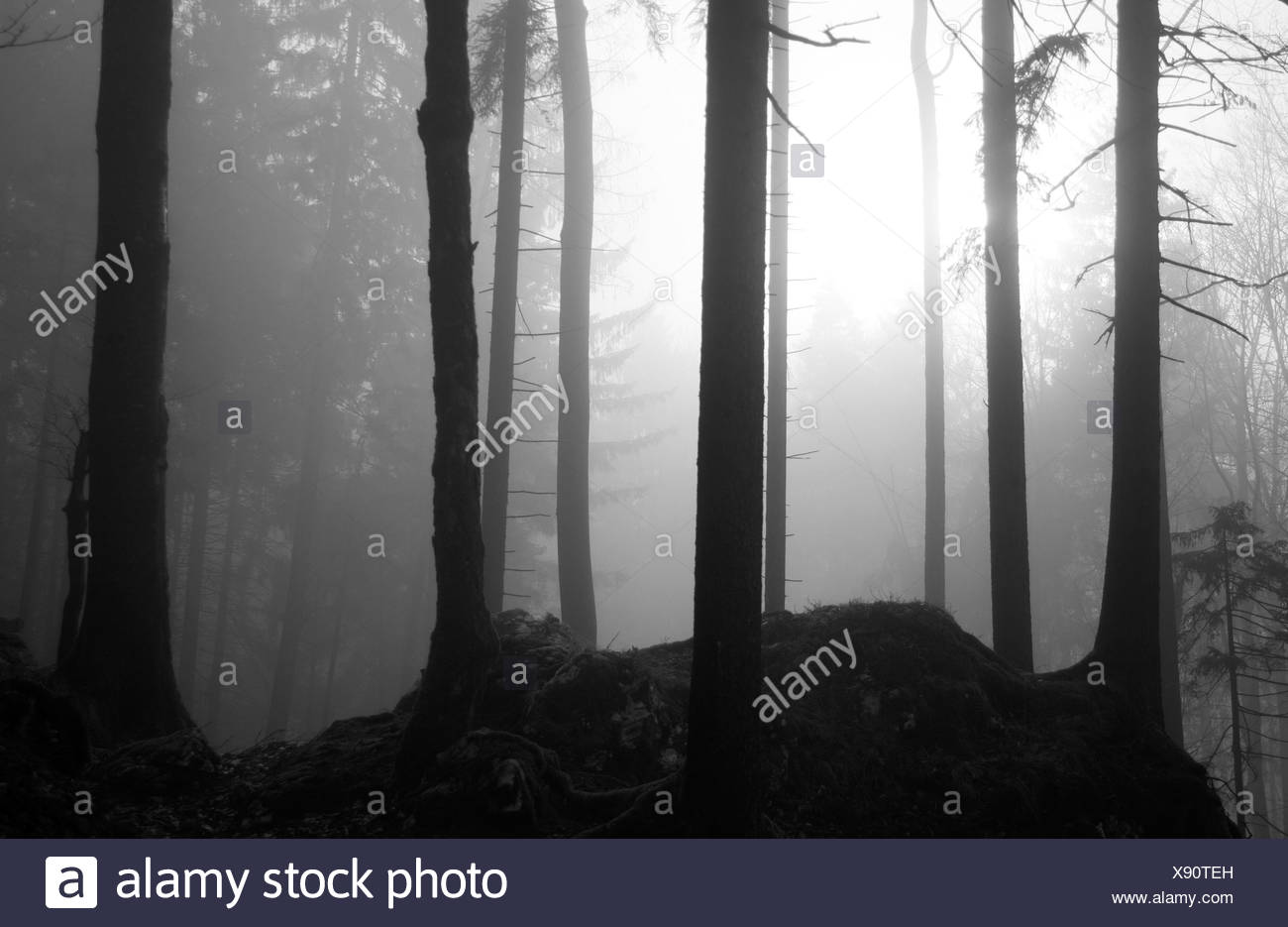 Autumnal forest - Stock Image