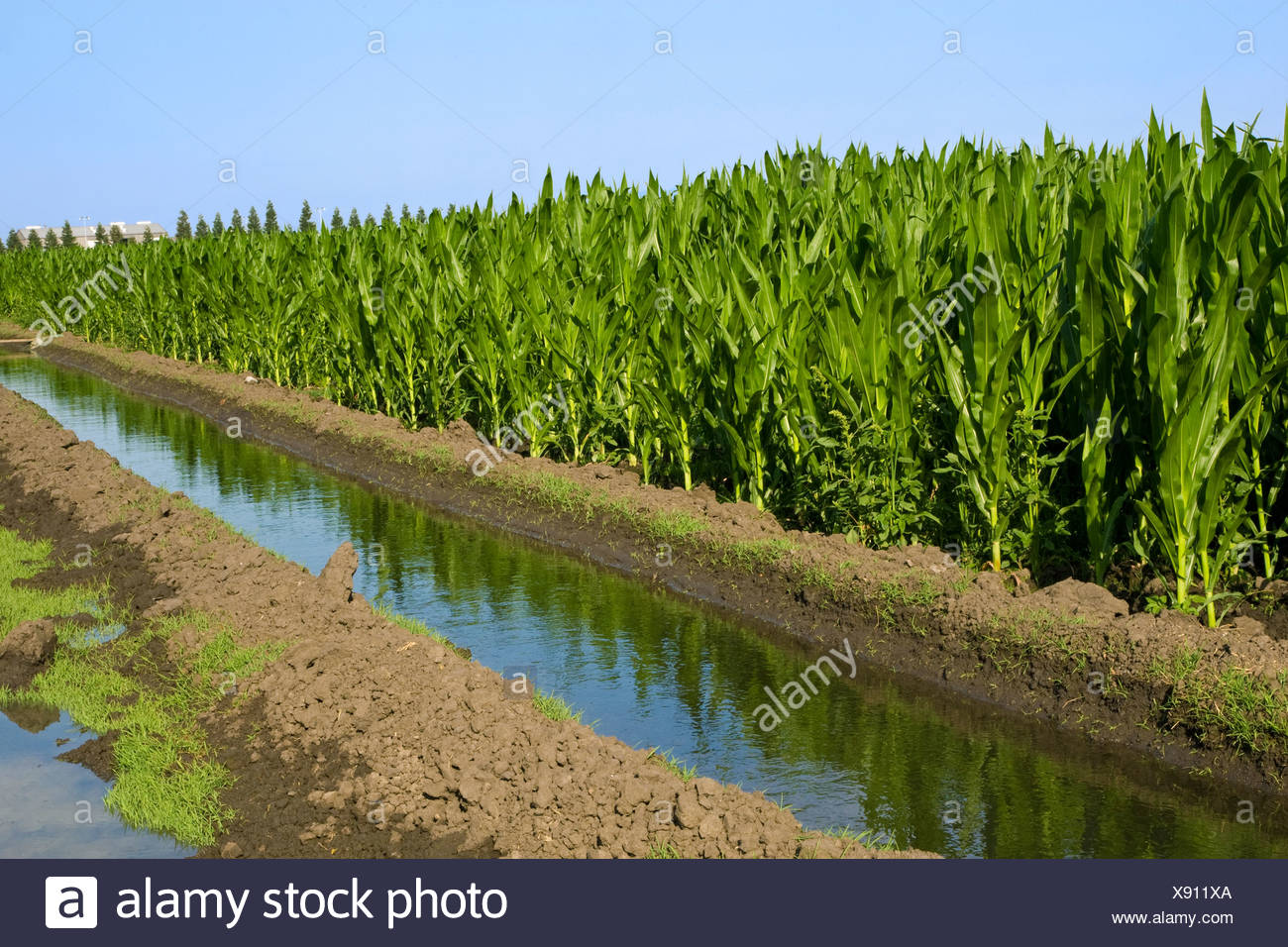 Agricultural Irrigation Canal : Irrigation canal green plants stock photos