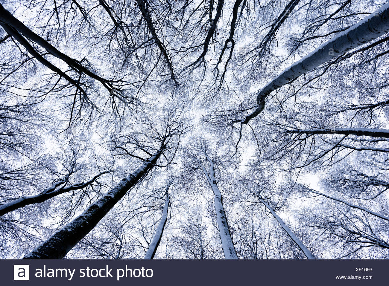 Germany, Bavaria, Augsburg Western Woods Nature Park, trees, winters, snow, cold, on top, view, centred, sky, white, branches, nature, scenery, - Stock Image
