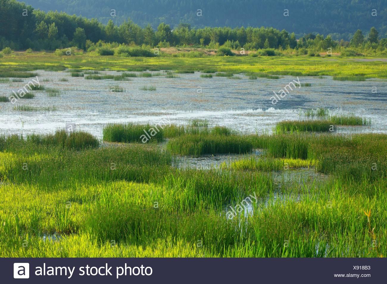 Eagle Marsh, Ankeny National Wildlife Refuge, Oregon. - Stock Image