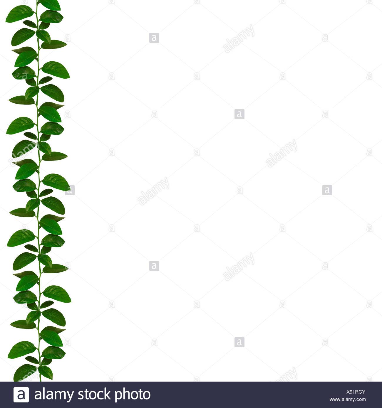 wonderful natural green ribbon - similar images available - Stock Image