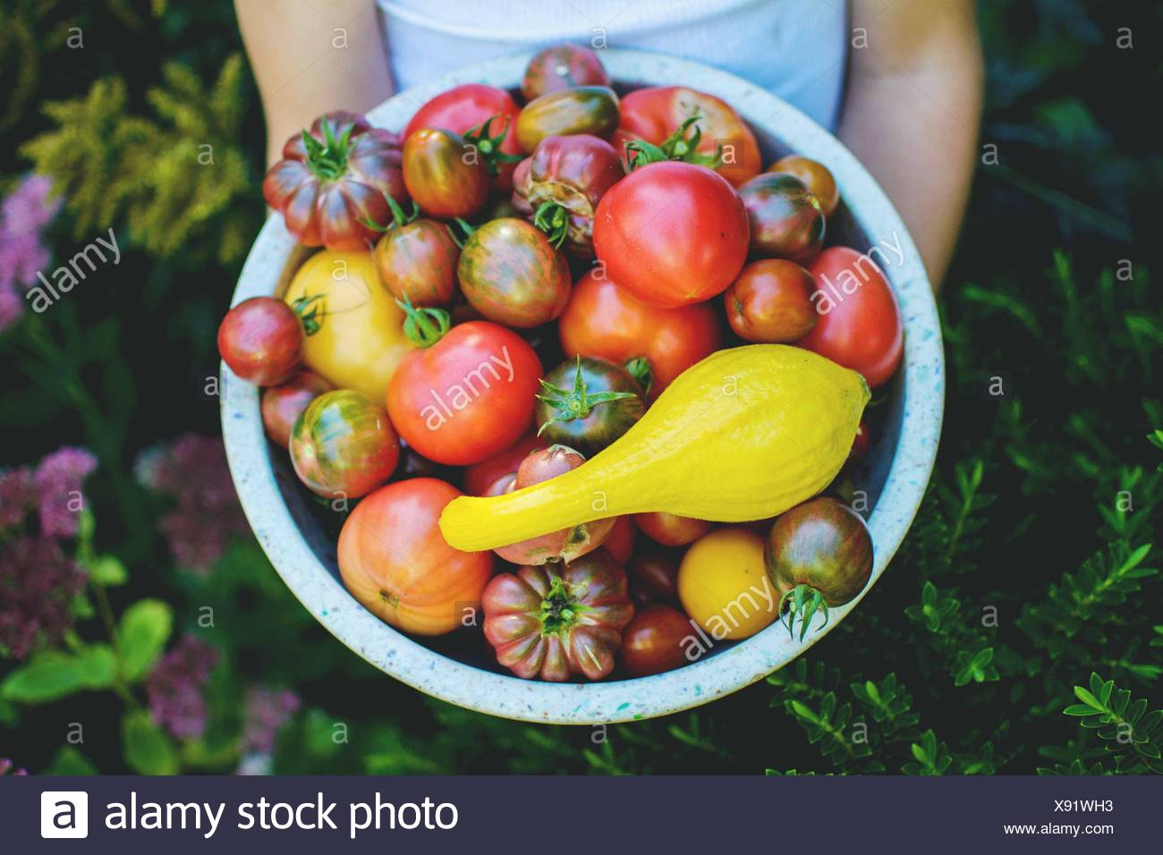 Child (4-5) holding bowl of garden tomatoes - Stock Image