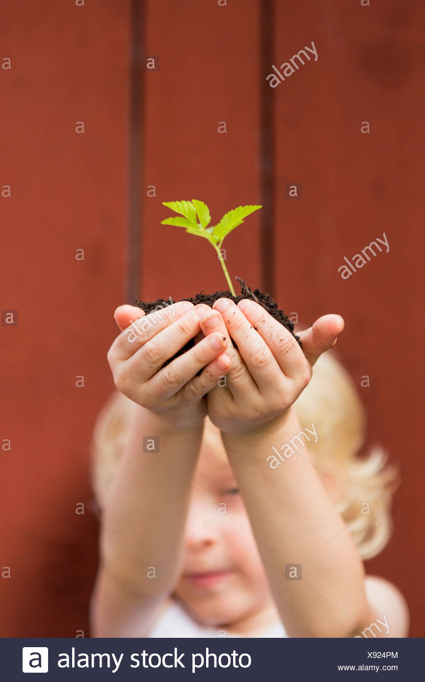 Girl holding seedling outdoors - Stock Image