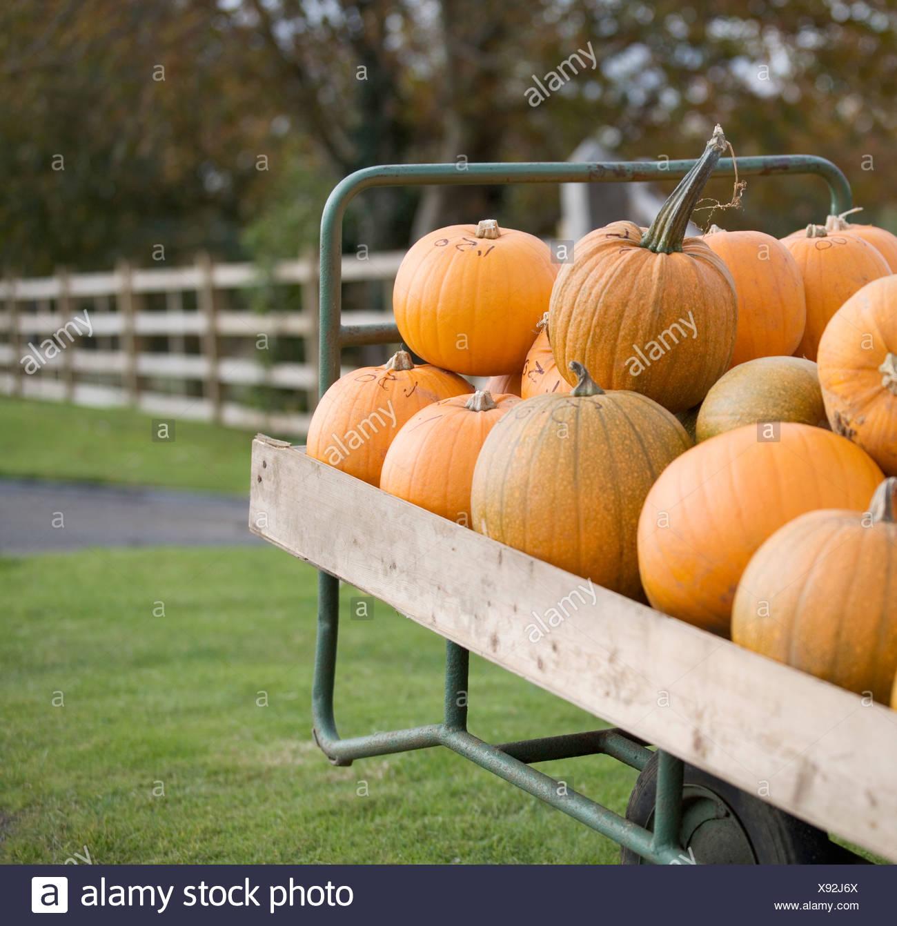 Pumpkins piled on a cart - Stock Image