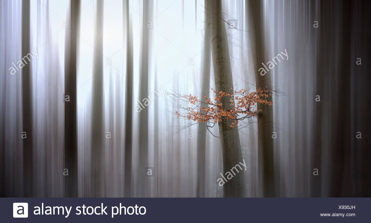 Autumn leaves in the winter forest with motion blur - Stock Image