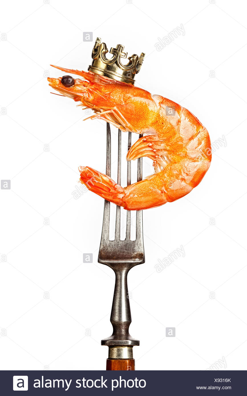King prawn on white background - Stock Image