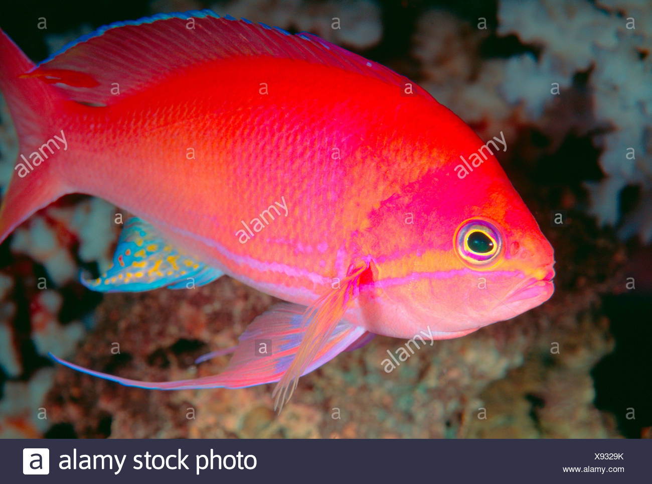 Tropical Fish Close Up Stock Photos & Tropical Fish Close Up Stock ...