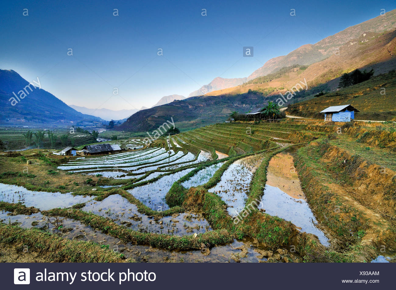 Irrigated rice terraces, rice paddies in Sapa or Sa Pa, Lao Cai province, northern Vietnam, Vietnam, Southeast Asia, Asia - Stock Image