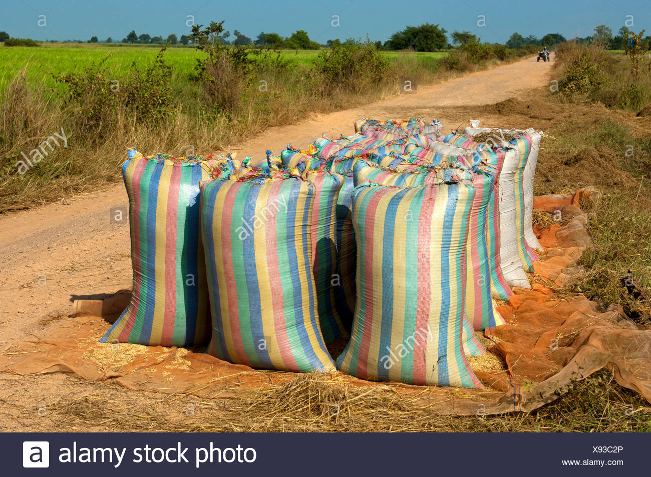 Bulging sacks of rice ready for collection on a dirt road, Battambang, Cambodia, Southeast Asia, Asia - Stock Image
