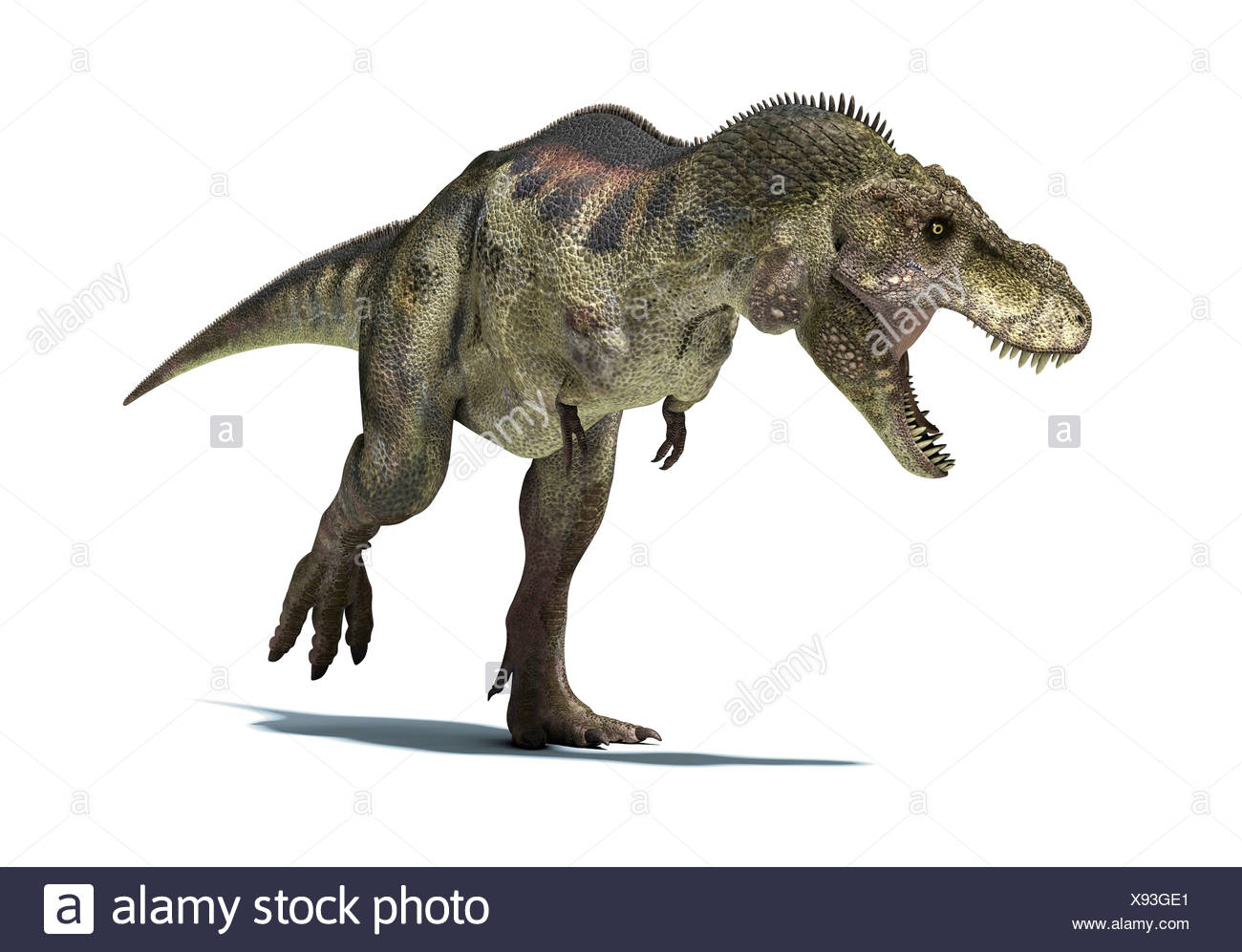 Tyrannosaurus rex dinosaur T rex was one of the largest carnivorous dinosaurs - Stock Image