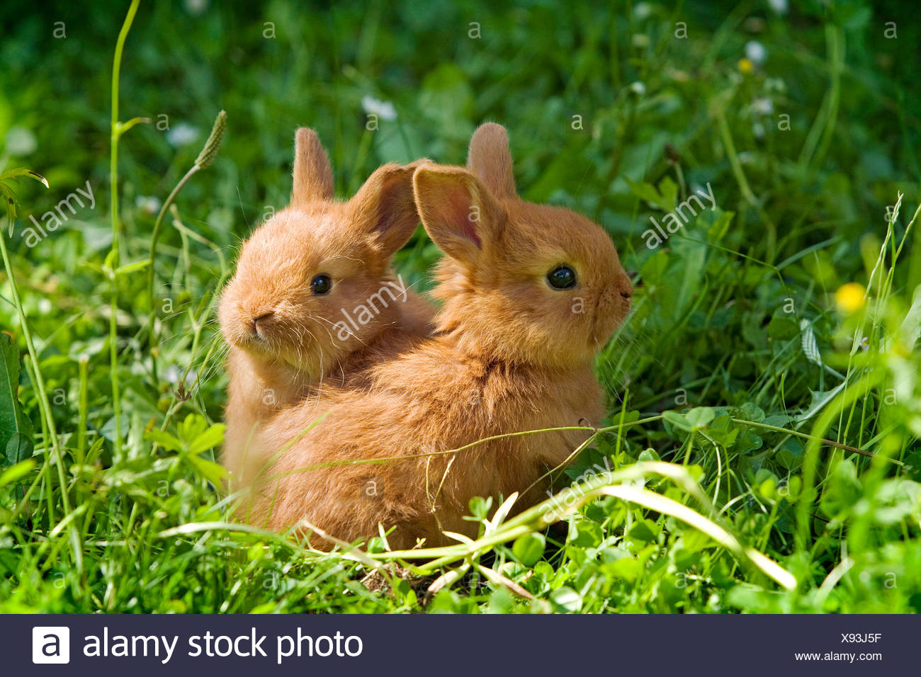 Two Rabbits Stock Photos & Two Rabbits Stock Images - Alamy