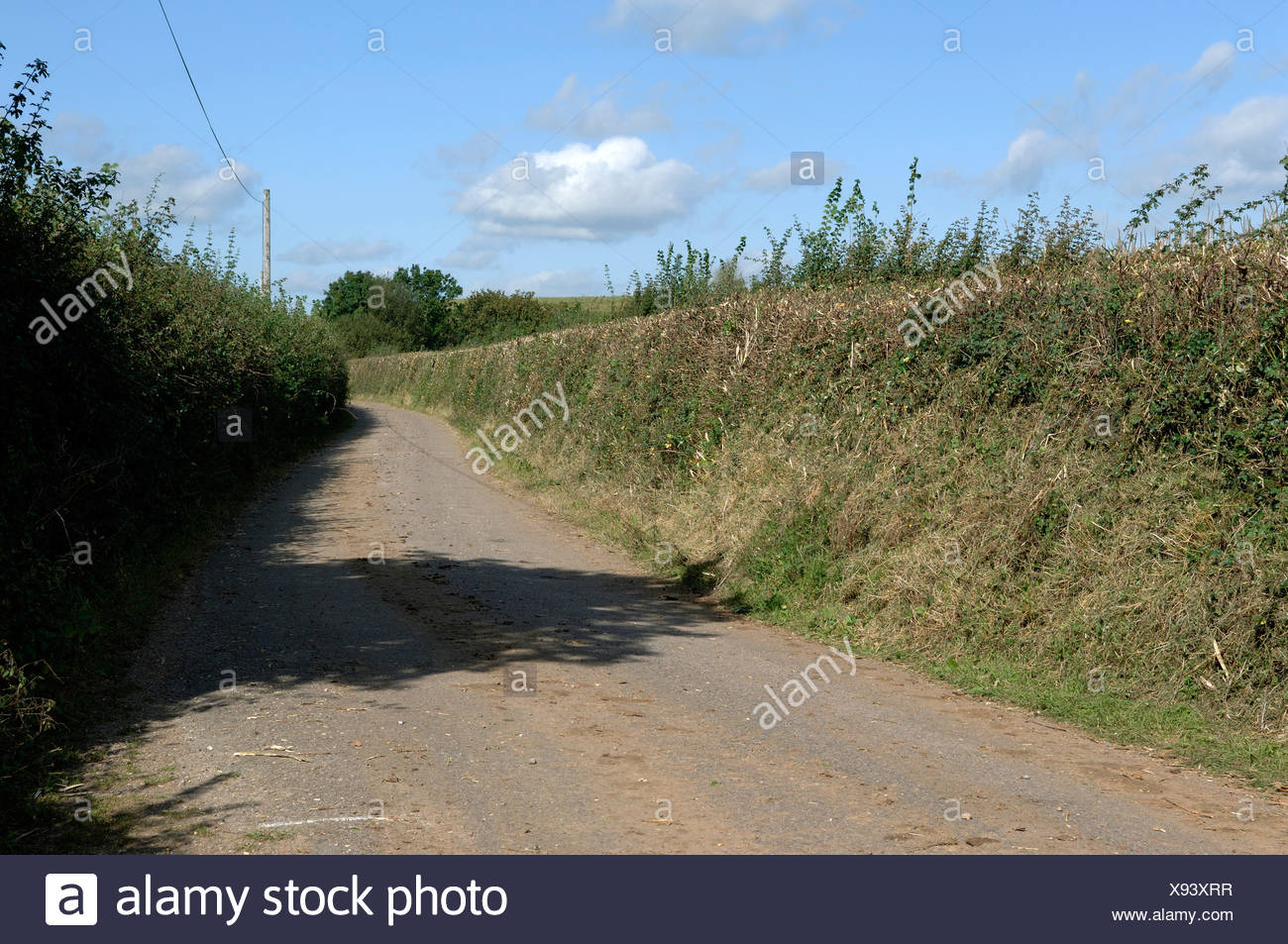 Devon A hedge part cut on one side of the road uncut on the other in autumn - Stock Image