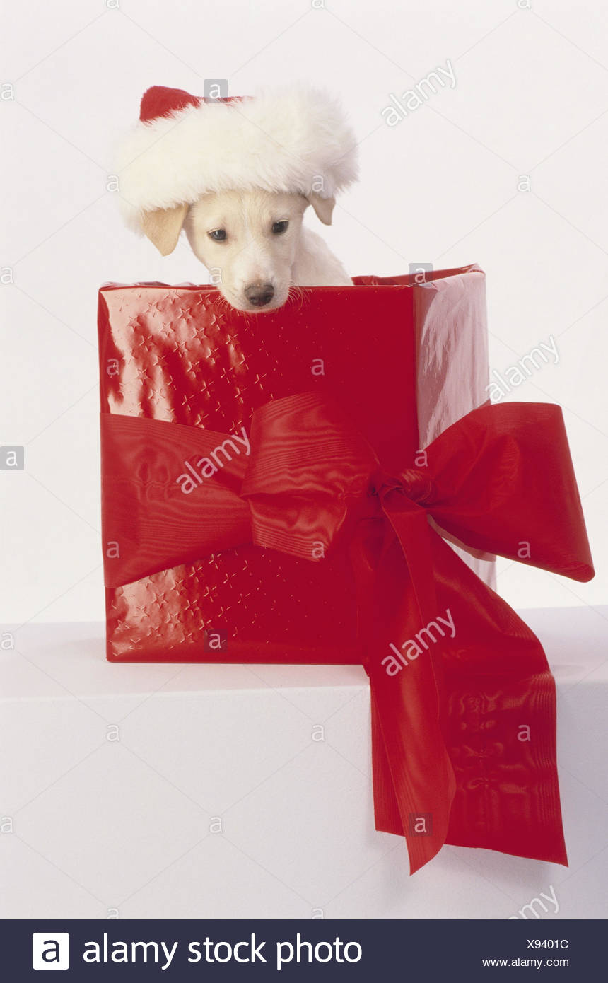 Christmas present surprise puppy gift
